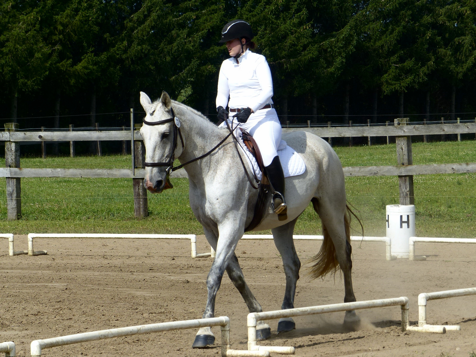 Geppetto at a dressage show