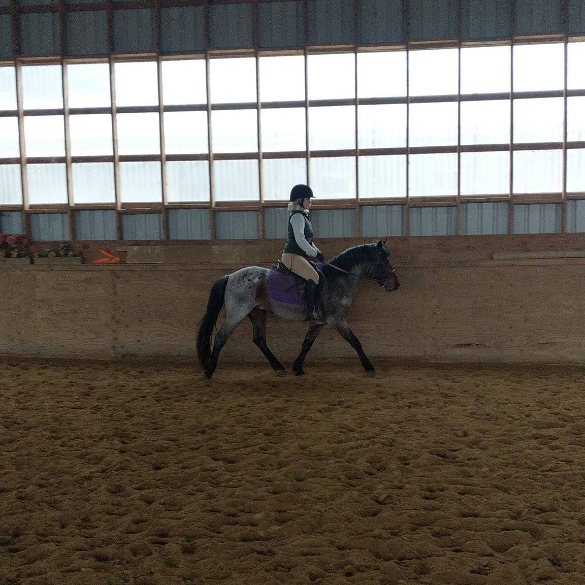 Trotting Under Saddle